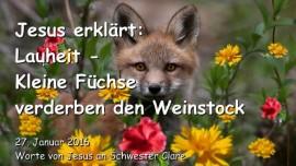 2016-01-27 - Jesus erklaert - Lauheit - Kleine Fuechse verderben den Weinstock