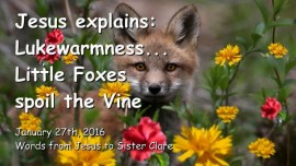 2016-01-27 - Jesus explains - Lukewarmness - Little Foxes spoil the Vine