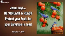 2016-02-10 - Vigilance-Readiness-Protect the Fruit-Birds-Insects-Salvation is near-Love Letter from Jesus