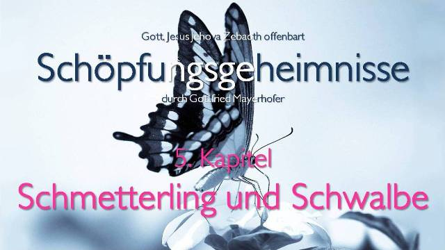 Gott offenbart Schoepfungsgeheimnisse - Schmetterling und Schwalbe