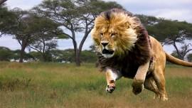 Иисус говорит о ходящих львах, о наших трех врагах
