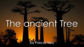 Pascal-Hess-2016-Fourth-Love Letter from Jesus-Song-The-ancient-Tree