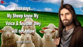 2021-08-26 - My Sheep know My Voice-Another they will not follow-Love Letter from Jesus Mother Mary